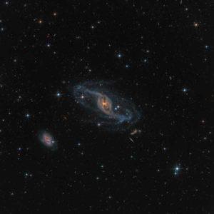 NGC 3718, uchwycona z Ranch Hidalgo in Animas w Nowym Meksyku, znajduje się w gwiazdozbiorze Wielkiej Niedźwiedzicy i słynie z tego, że jest szczególnym rodzajem galaktyki spiralnej z poprzeczką. Grawitacyjne oddziaływania z pobliską NGC 3729 (galaktyka spiralna w lewym dolnym rogu) leżą prawdopodobnie u źródeł deformacji ramion spiralnych tej galaktyki i ciemnego pasma pyłów wokół jej jądra. Autor: Mark Hanson (USA) Zdjęcie: NGC 3718